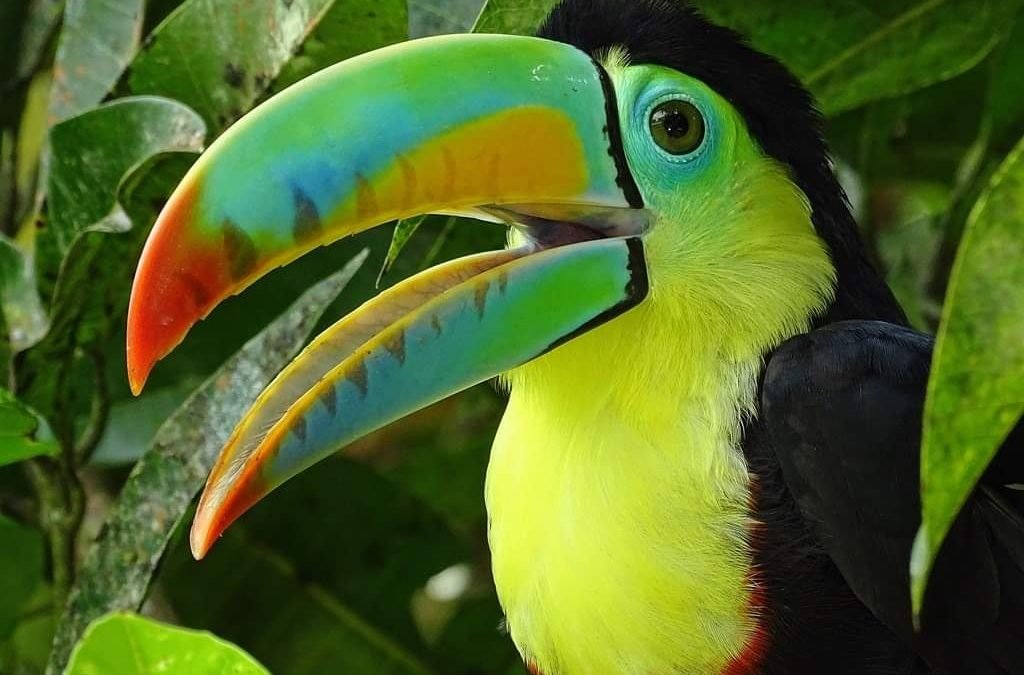 Where to watch animals in Panama